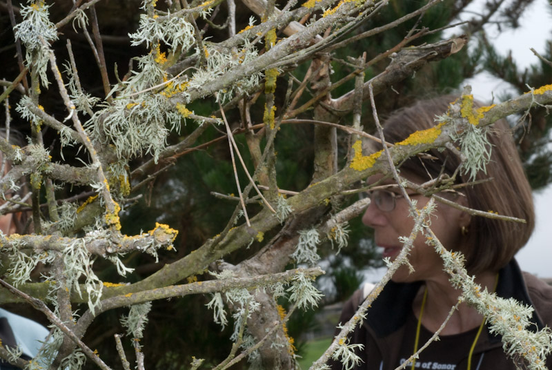 Various lichens, Judy Roberson in background